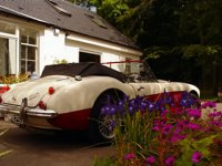 Voiture de collection : Austin Healey 3000